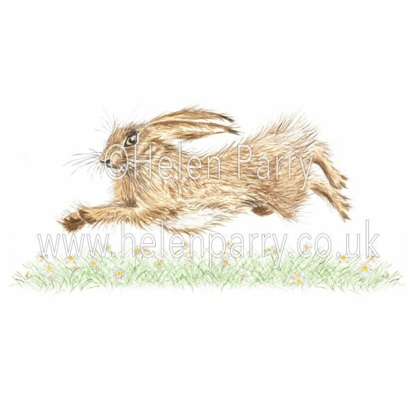 greeting card of hare gliding over daisies