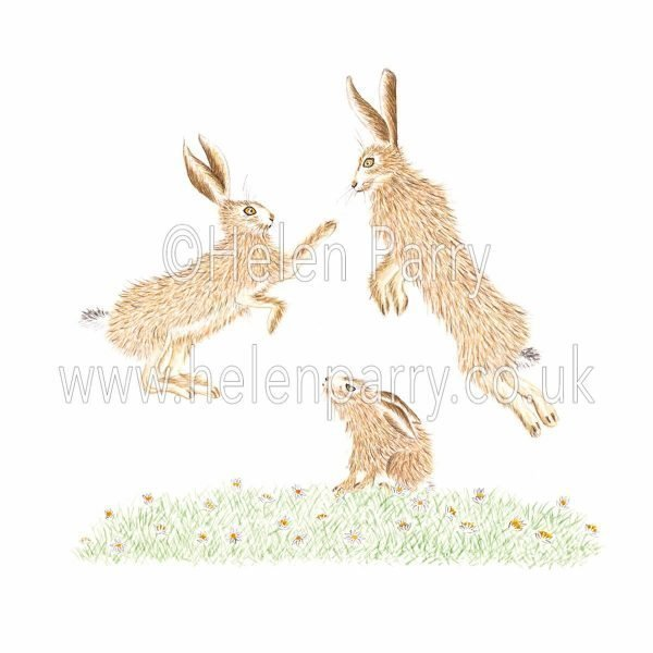 greeting card of boxing hares with leveret watching below