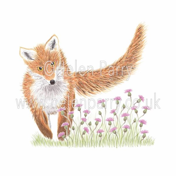greeting card of fox in thistles