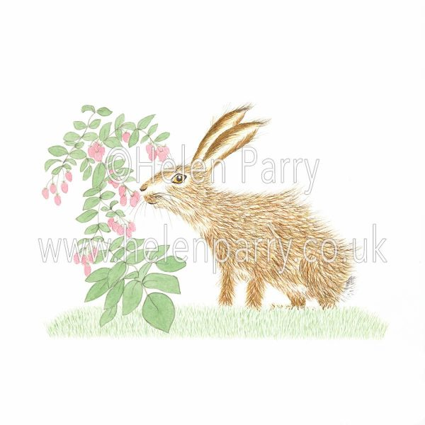 greeting card of hare eating and picking raspberries