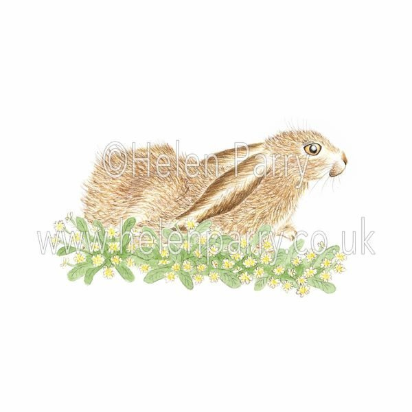 greeting card of hare resting amongst primroses