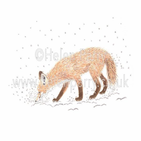 greeting card of fox using snout as a snow shovel