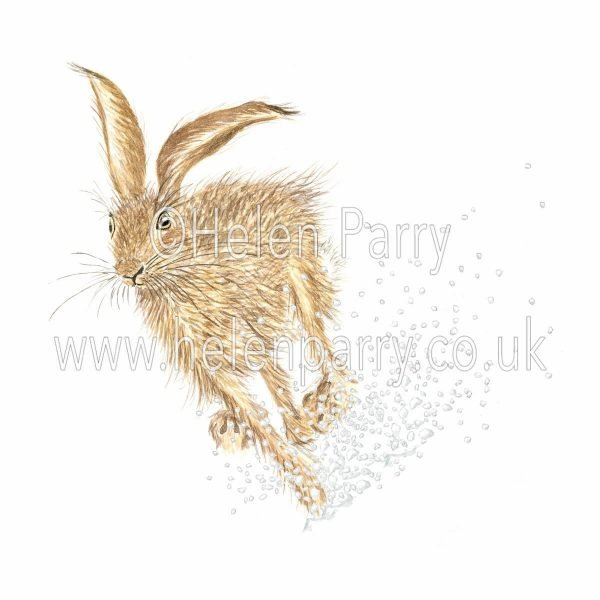 greeting card of hare spraying snow while dashing