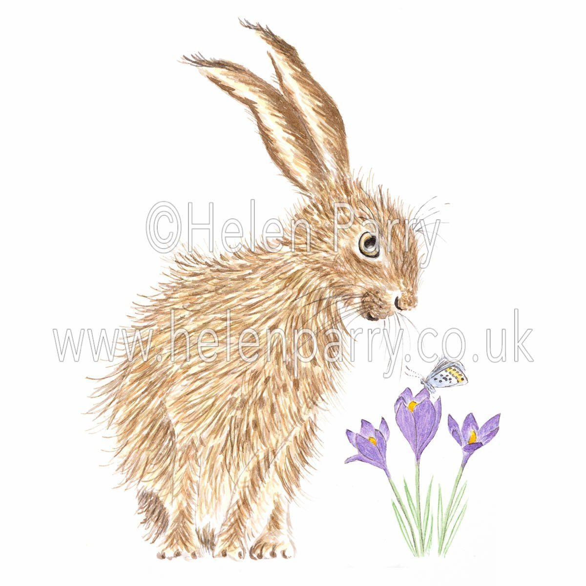 greeting card of hare leaning over watching butterfly on crocus flower