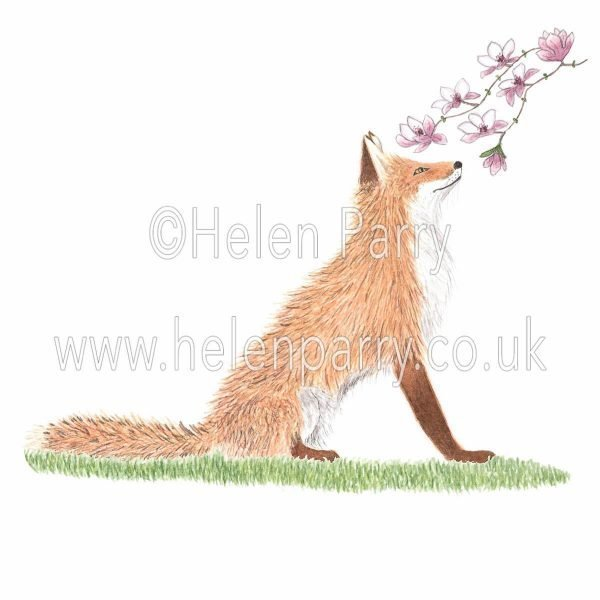 greeting card of fox smelling the sweet magnolia flower scent
