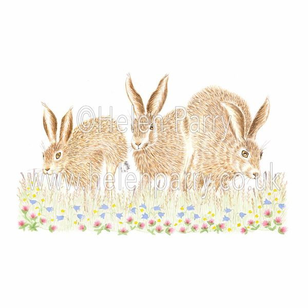 greeting card of hares racing together