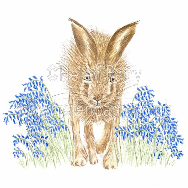 greeting card of hare running through the bluebells