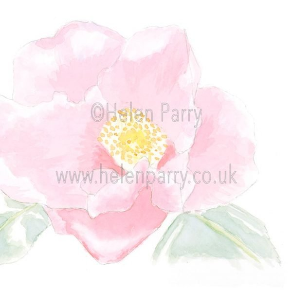 Pink Camellia by Watercolour Artist Helen Parry