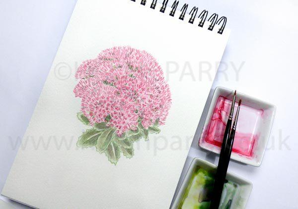 Sedum by Helen Parry Watercolour Artist