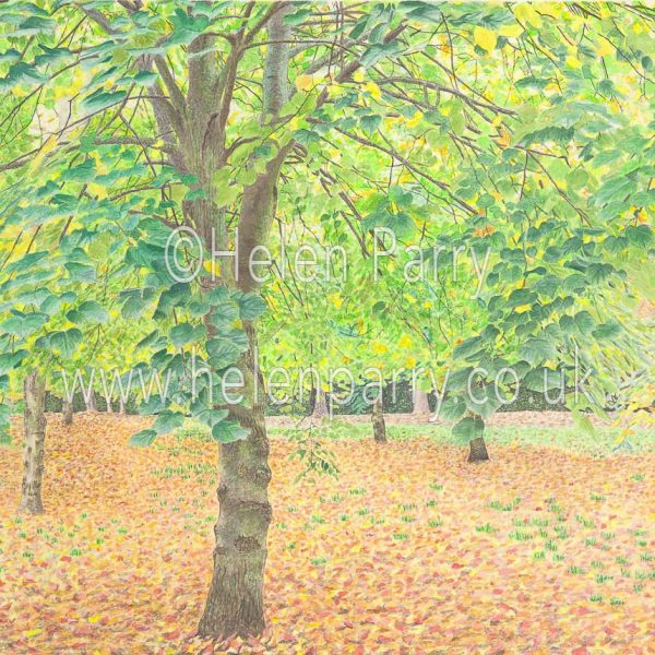 fine art print of tree canopy of autumn colours