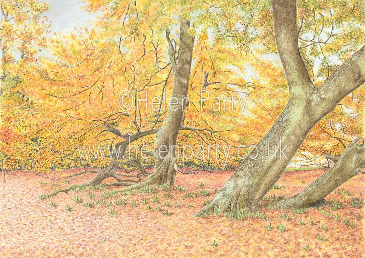 watercolour painting of trees with autumn foliage