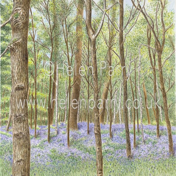 watercolour painting of bluebell woodland