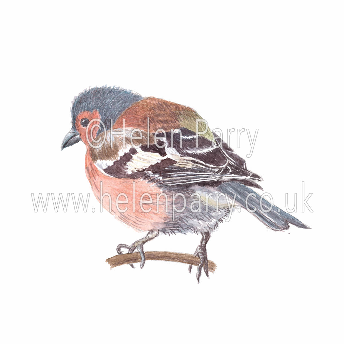 watercolour painting of Chaffinch bird