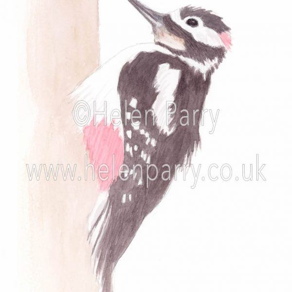watercolour painting of great spotted woodpecker bird