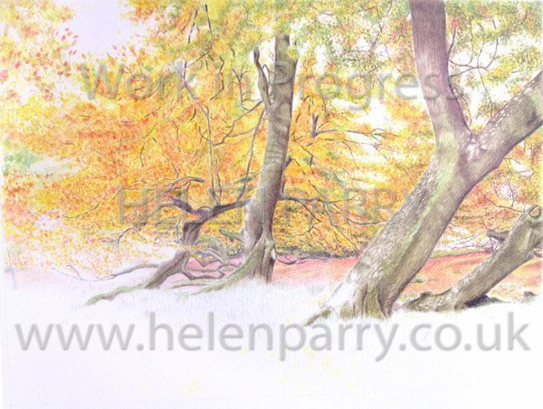 Fifth stage Arley in Autumn watercolour