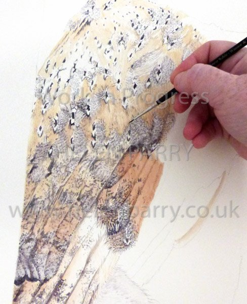 Third stage Barn Owl watercolour