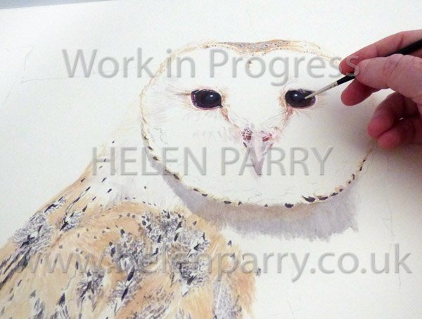 Fourth stage Barn Owl watercolour close up