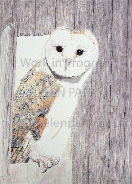 Fifth stage Barn Owl watercolour
