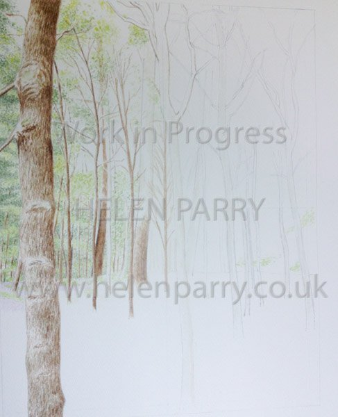 Stage one Bluebell Woodland watercolour