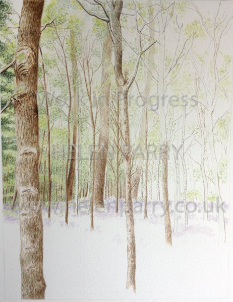 Stage two Bluebell Woodland watercolour