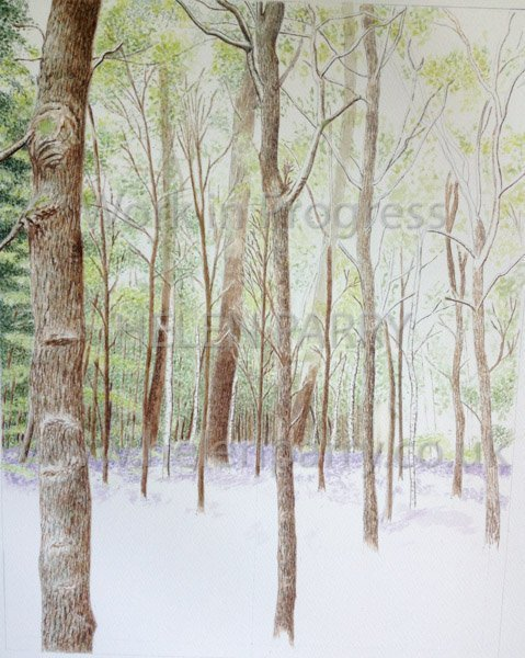 Stage three Bluebell Woodland watercolour
