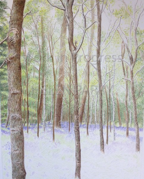 Stage four Bluebell Woodland watercolour