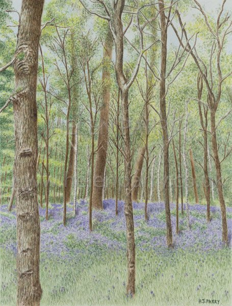 Bluebell Woodland watercolour painting by Helen Parry