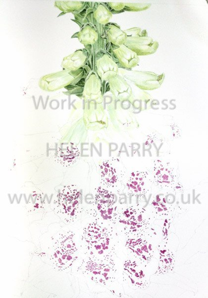 Second stage Foxglove watercolour painting