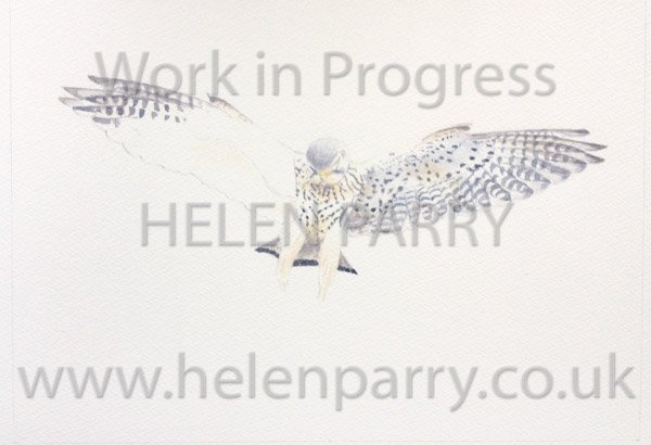 Stage two Kestrel Landing watercolour painting