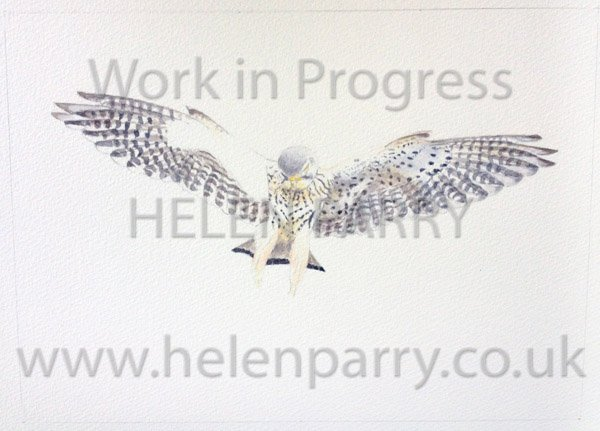 Stage three Kestrel Landing watercolour painting