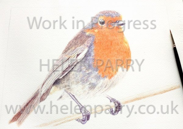 Second stage Robin watercolour