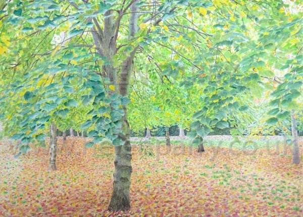 Tree Canopy painting by Helen Parry