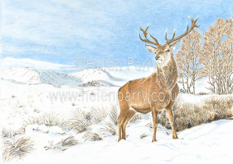 watercolour painting of stag in snowy winter mountain landscape