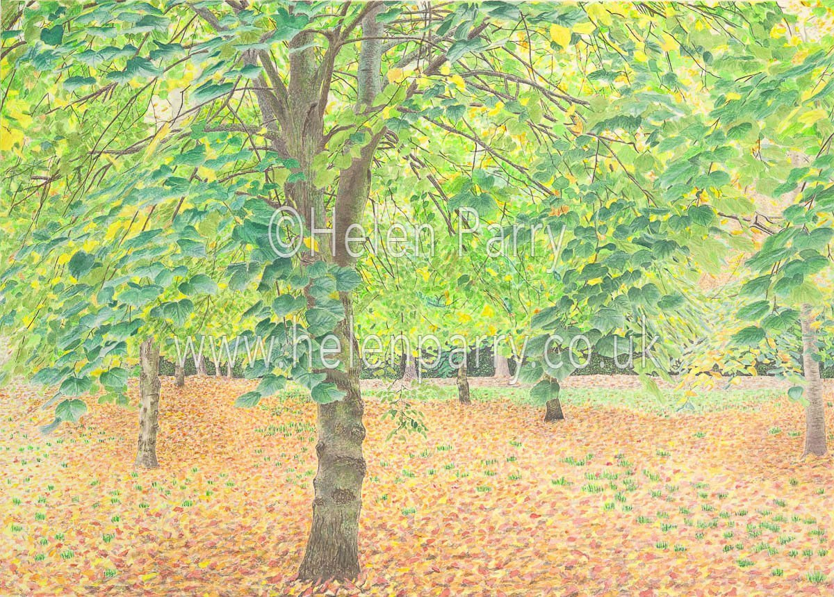 watercolour painting of tree canopy with autumn leaves