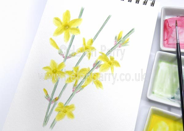 Winter Jasmine watercolour sketch by Helen Parry
