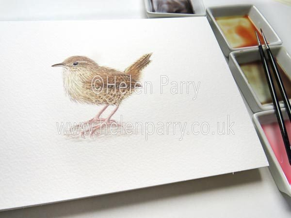 Wren watercolour sketch by Helen Parry