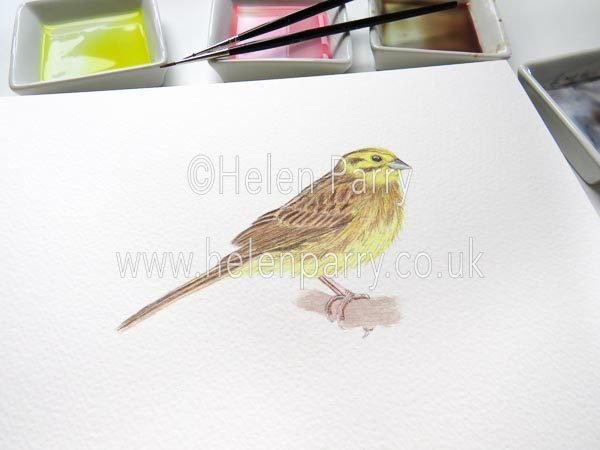 Yellowhammer watercolour sketch by Helen Parry