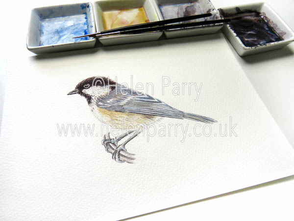 Helen Parry Watercolour Artist -Coal Tit