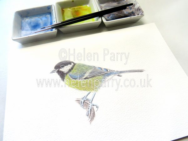Helen Parry Watercolour Artist -Great Tit