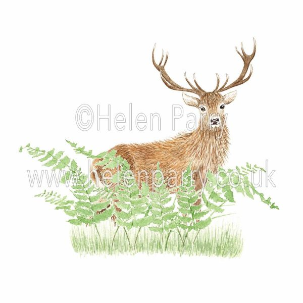 greeting card of red deer stag hiding behind ferns