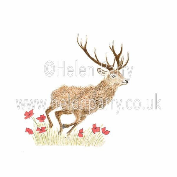 watercolour painting of red deer stag running through red poppies