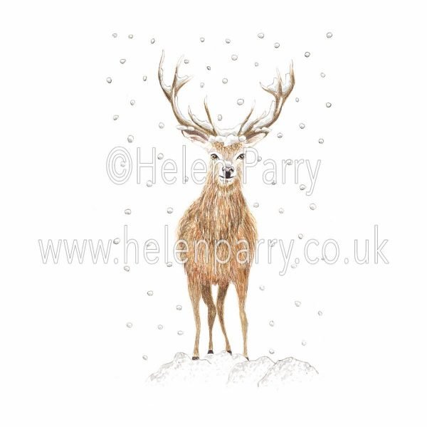 watercolour painting of red deer stag in falling snow
