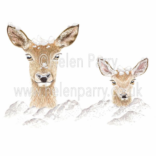 watercolour painting of doe and fawn deer heads peeping out of snow