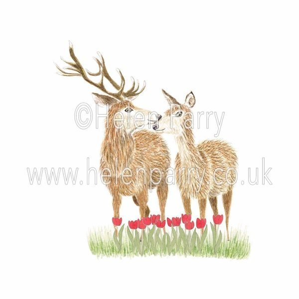 Watercolour painting of two red deer in a field of tulips