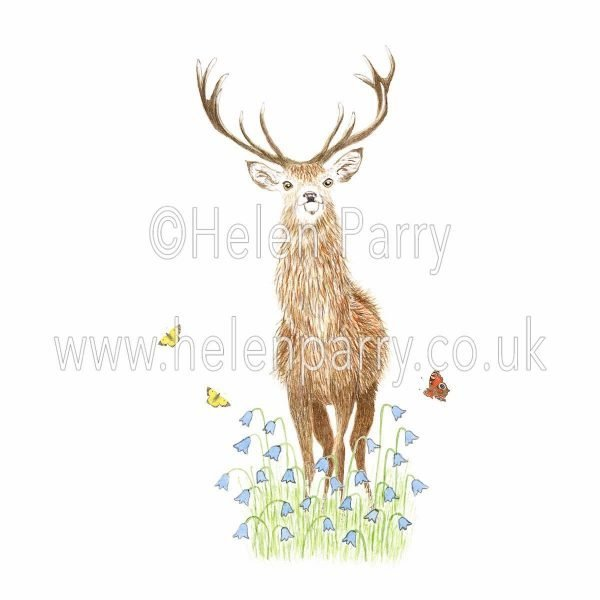 watercolour painting of red deer stag standing in harebells watching onlookers