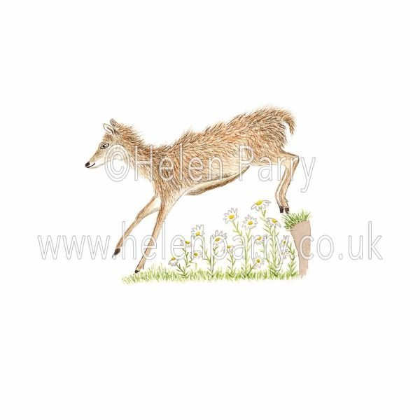 watercolour painting of doe red deer jumping over daises