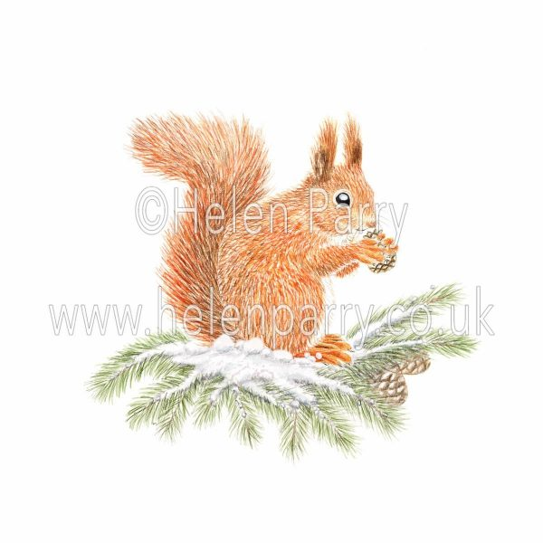Watercolour painting of Red squirrel sitting on snow covered branch eating pine cone
