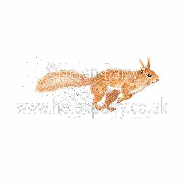 Painting of red squirrel dashing through snow