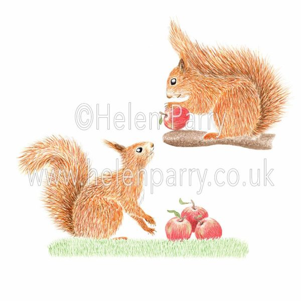 Watercolour painting of two squirrels collecting apples