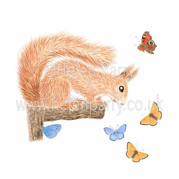 Watercolour painting of red squirrel watching butterflies fluttering